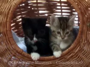 Luna and Milo about to discover their new home