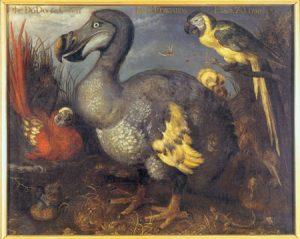 De dodo en andere vogels op een schilderij van Roelant Savery uit 1626.