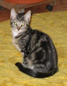 Hiro as kitten