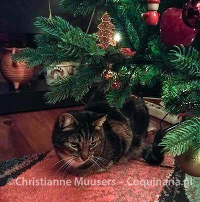 Kat Hiro onder de kerstboom, 2016