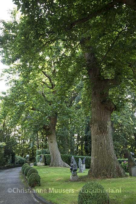 Honderdvijftig jaar oude tamme kastanjebomen, Beeldentuin De Zanderij, 's-Graveland