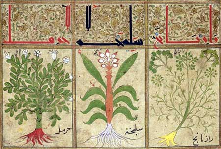Medicinal herbs, like rue and cassia, from the Book of Treacles (1199). Source Gallica.bnf.fr