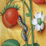Aardbeienplant in een middeleeuwse bladversiering