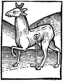 Musk deer, woodcut from the Hortus Sanitatis (1490). Source: Wikipedia