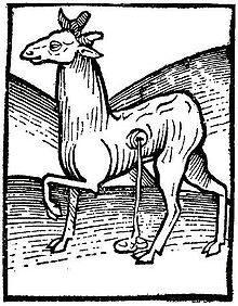 Muskushert, houtsnede uit de Hortus Sanitatis (1490). Bron: Wikipedia