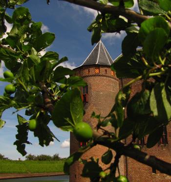 Rijpende pruim in de boomgaard bij het Muiderslot