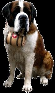 Sint-Bernardhond met reddend vaatje cognac (Wikimedia)