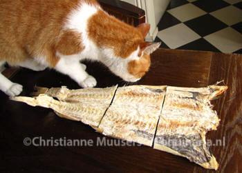 De gebeukte stokvis voor het weken. Ook interessant voor katten!