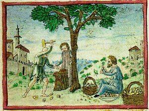 Amandelen in Tacuinum Sanitatis (Wenen, cod.Vindoboniensis 2396)