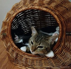 Luna and Milo still like to relax in their travelling basket
