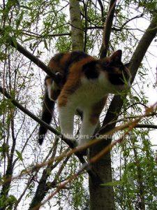 Poesjenel in a tree