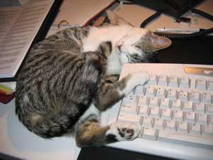 Relaxte Clio lag graag op mijn bureau