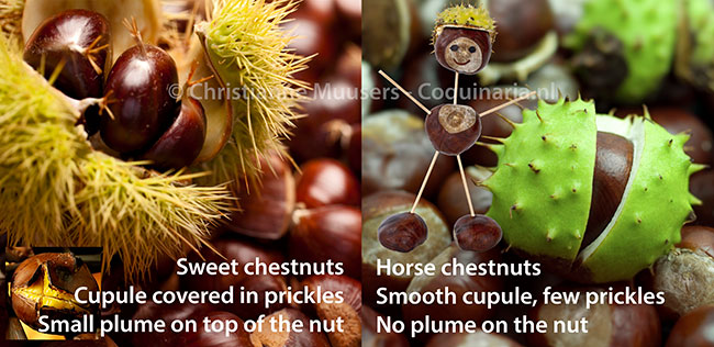 Differences between sweet chestnuts and horse chestnuts