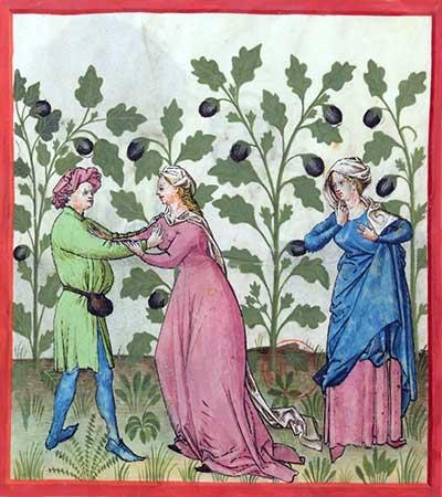 Aubergines, afgebeeld in een Tacuinum Sanitatis (BnF Lat9333)