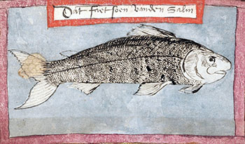 Salmon, by Adriaen Coenen (Vsboec, RL, The Hague)