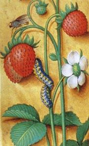 Middeleeuwse afbeelding van bosaardbeien.