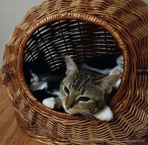 Na een jaar vinden Luna en Milo de kattenmaand nog steeds een lekker plekje.