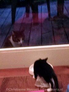 Een bezoekpoes is zeer geïnteresseerd in onze kittens