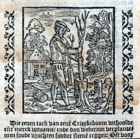 Het enten van kersenbomen, Stevens en Liebaut, 1594.