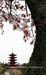 Tempel en bloesem in Miyajima, Japan