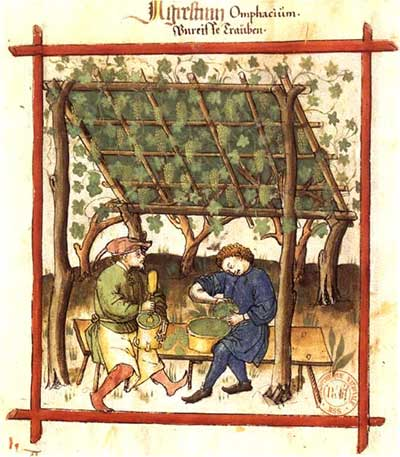 Pressing unripe grapes for verjuice. Illustration from Tacuinum Sanitatis, BNF Lat.9333