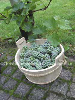 Early-harvested grapes for making verjuice